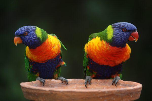 Birds Avifauna
